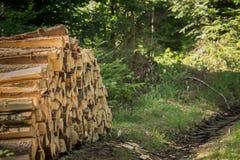 Identifiez-vous empilés la forêt image stock