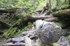 Identifiez-vous massifs les bois photographie stock