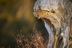 Identifiez-vous mort la forêt, VOSGES, Frances photographie stock libre de droits