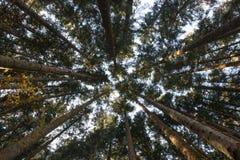Identifiez-vous sciés une forêt photo stock