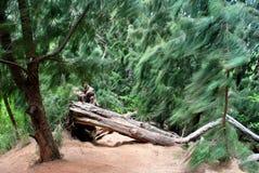 Identifiez-vous une forêt Photos libres de droits