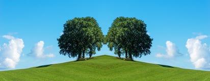 Identiska trädgrupper på ängen Fotografering för Bildbyråer