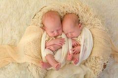 Identyczni nowonarodzeni bliźniacy zdjęcie royalty free