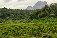 Idiki Kerala, God& x27; s il proprio paese fotografia stock libera da diritti