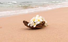 Idilio de la playa de la flor del Frangipani Foto de archivo