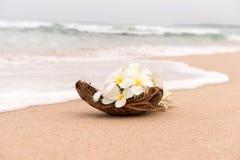 Idilio de la playa de la flor del Frangipani Imagen de archivo