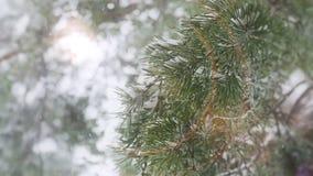 Idilio del invierno en un bosque del pino almacen de video