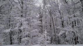 Idilio hermoso del ` s del invierno, nieve en árboles almacen de metraje de vídeo