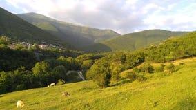 idilio Las vacas pastan en las colinas fotografía de archivo