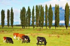 Idilio rural en Patagonia chilena Imagen de archivo libre de regalías