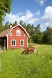 Idilio sueco Imagen de archivo libre de regalías