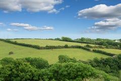 Idillic-Landschaft mit Schafen, Lämmer, RAM auf einem perfekten saftigen gree Lizenzfreie Stockfotografie