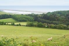 Idillic-Landschaft mit Schafen, Lämmer, RAM auf Feld Lizenzfreie Stockfotos