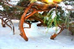 Idillio di inverno immagini stock