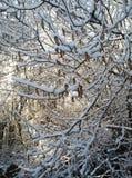 Idillio di Snowy Immagine Stock Libera da Diritti