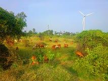 Idillio rustico moderno variopinto pastorale nel parco eolico dell'India Fotografia Stock