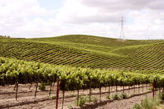 Idillyc vineyards on small slopes. On a spring day Royalty Free Stock Photography