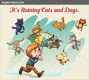 An idiom showing a rain with animals Stock Photo
