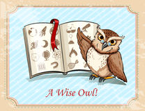 Idiom a wise owl Royalty Free Stock Photography
