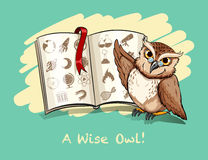 Idiom a wise owl Stock Photography