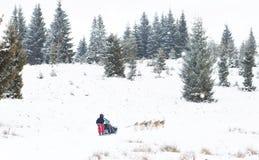 Iditarod足迹拉雪橇狗赛跑冬天背景 图库摄影