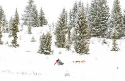 Iditarod足迹拉雪橇狗赛跑冬天背景 免版税库存图片