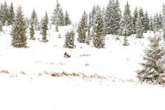 Iditarod足迹拉雪橇狗赛跑冬天背景 免版税图库摄影