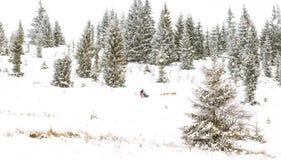 Iditarod足迹拉雪橇狗赛跑冬天背景 库存图片