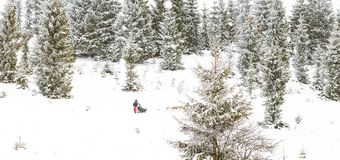 Iditarod足迹拉雪橇狗赛跑冬天背景 库存照片