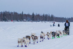 2015 Iditarod Dog Team Stock Images