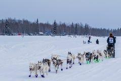 2015 Iditarod-Hondteam Stock Afbeeldingen