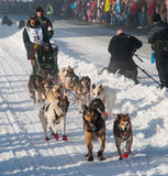 Iditarod Start Royalty Free Stock Photography