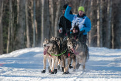 Iditarod Start Stock Image