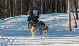 Iditarod Start Royalty Free Stock Photos