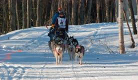 Iditarod Start Royalty Free Stock Photos