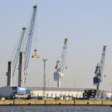 Idle cranes in container port Royalty Free Stock Photography