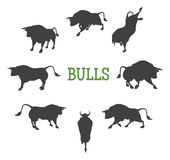 Idle and Moving Bulls Stock Images