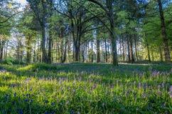 Idless woods near truro cornwall england UK Royalty Free Stock Photo