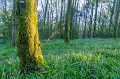 Idless woods near truro cornwall england UK Stock Photography
