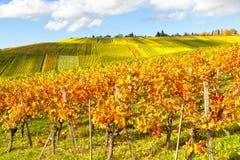 Idllicwijngaard in de herfst Stock Fotografie