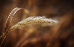 Ido con el viento Fotos de archivo