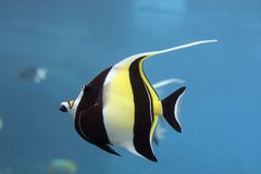 Idofish Stock Photo
