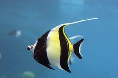 idofish Arkivfoto