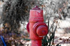 Idrante antincendio su una foresta fotografia stock