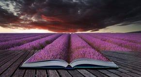 Idérika begreppssidor av boken som bedövar lavendelfältlandskap Fotografering för Bildbyråer