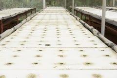 Idroponico in azienda agricola metodo di coltura delle piante facendo uso della sostanza nutriente in w Fotografia Stock Libera da Diritti