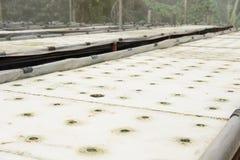 Idroponico in azienda agricola metodo di coltura delle piante facendo uso della sostanza nutriente in w Fotografie Stock
