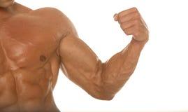 idrotts- muskulös huvuddelbyggmästare för arm Arkivbilder