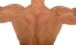 idrotts- tillbaka muskulös huvuddelbyggmästare Arkivbild