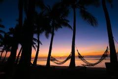 Idylic Hammocks Stretched Between Coconut Trees on Panglao Stock Photo